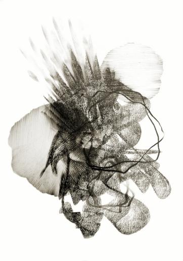 Metamorphosis 7 - Graphite on Paper
