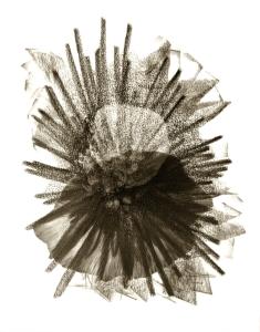 MEtamorphosis 4 - Graphite on Paper